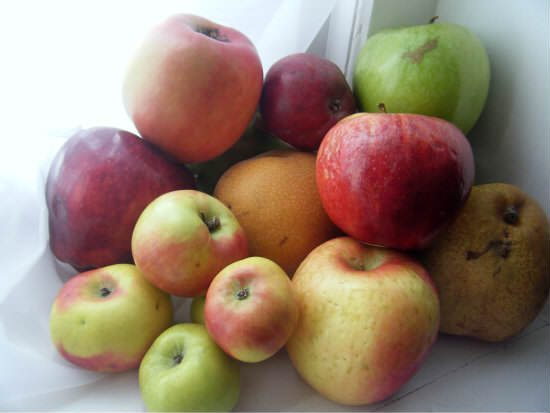 Cardamom Apple Pearsauce Recipe | snappygourmet.com