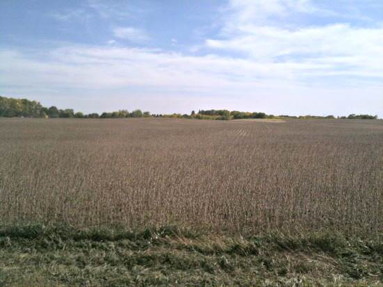 Visiting Iowa – CornQuest